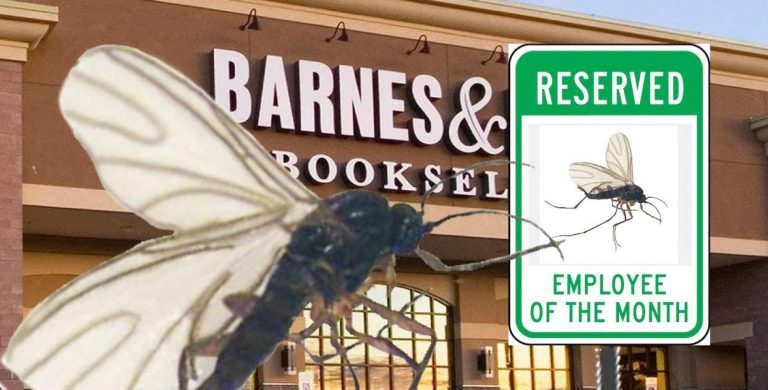 Armchair Gnat Named Tupelo Barnes And Noble Employee Of The Month